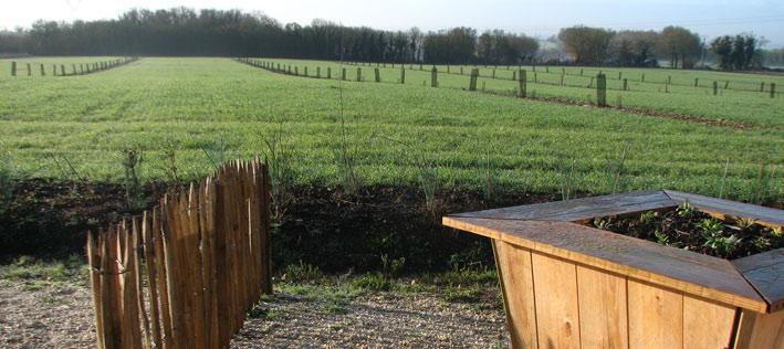 Agroforesterie et blés anciens